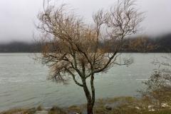 Lagoa das Furnas, See, Baum