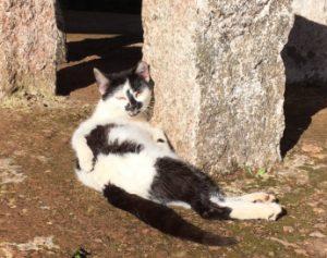 sich in der Sonne rekelnde Katze, Azoreninsel Sao Miguel, Aussichtspunkt