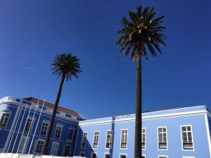 Palmen in Ponta Delgada