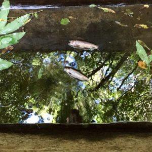 Fische im Wasserkanal